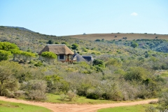 Garden Route Safari Camp  (3)