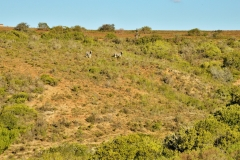Garden Route Safari Camp  (11)