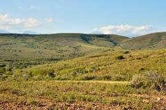Garden Route Safari Camp  (9)