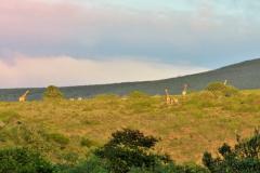 Garden-Roure-Safari-Camp-Wild-life-1
