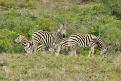 Garden-Roure-Safari-Camp-Wild-life-13