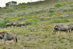 Garden-Roure-Safari-Camp-Wild-life-19