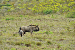 Garden-Roure-Safari-Camp-Wild-life-21