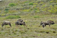 Garden-Roure-Safari-Camp-Wild-life-22