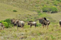 Garden-Roure-Safari-Camp-Wild-life-24