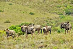 Garden-Roure-Safari-Camp-Wild-life-26