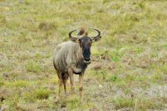 Garden-Roure-Safari-Camp-Wild-life-27
