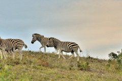 Garden-Roure-Safari-Camp-Wild-life-28
