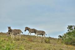 Garden-Roure-Safari-Camp-Wild-life-29