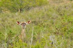 Garden-Roure-Safari-Camp-Wild-life-30