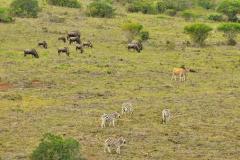 Garden-Roure-Safari-Camp-Wild-life-31