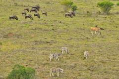 Garden-Roure-Safari-Camp-Wild-life-32