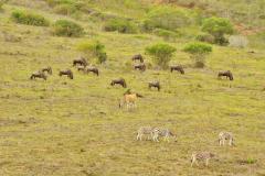 Garden-Roure-Safari-Camp-Wild-life-34