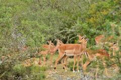 Garden-Roure-Safari-Camp-Wild-life-38