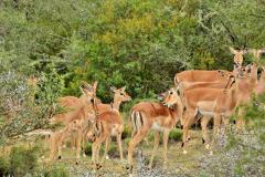 Garden-Roure-Safari-Camp-Wild-life-39