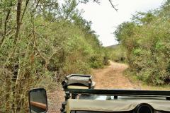 Garden-Roure-Safari-Camp-Wild-life-41