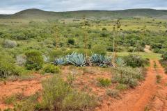 Garden-Roure-Safari-Camp-Wild-life-43