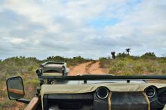 Garden-Roure-Safari-Camp-Wild-life-44