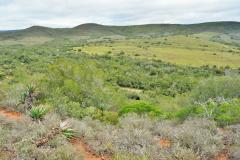 Garden-Roure-Safari-Camp-Wild-life-45