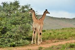 Garden-Roure-Safari-Camp-Wild-life-47