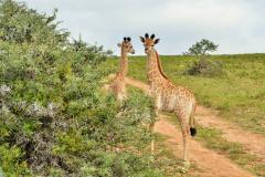 Garden-Roure-Safari-Camp-Wild-life-48
