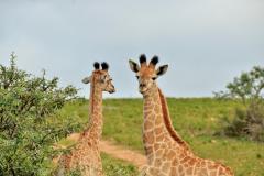 Garden-Roure-Safari-Camp-Wild-life-49