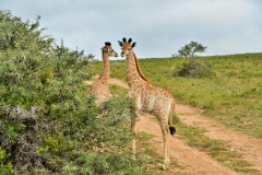 Garden-Roure-Safari-Camp-Wild-life-50