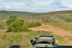 Garden-Roure-Safari-Camp-Wild-life-51