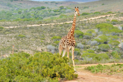 Garden-Roure-Safari-Camp-Wild-life-52