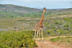 Garden-Roure-Safari-Camp-Wild-life-53