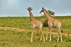 Garden-Roure-Safari-Camp-Wild-life-54