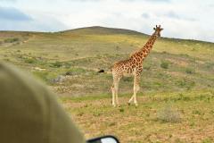 Garden-Roure-Safari-Camp-Wild-life-55