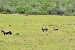 Garden-Roure-Safari-Camp-Wild-life-8