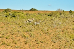 Garden Route Safari Camp  (12)