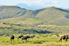 Garden Route Safari Camp  (20)