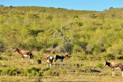 Garden Route Safari Camp  (30)