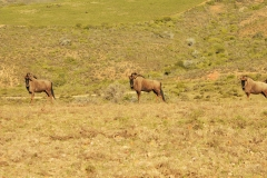 Garden Route Safari Camp  (8)