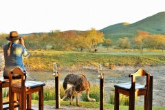 Garden Route Safari Camp  (97)