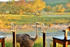 Garden Route Safari Camp  (98)